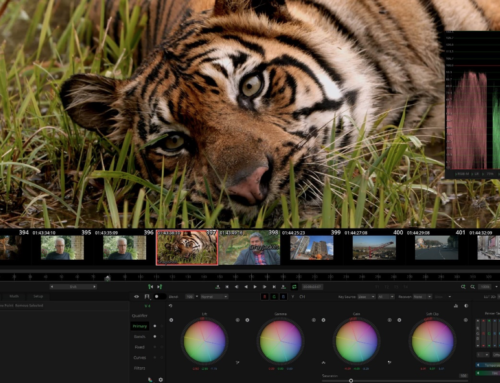 Post Production: Working Remotely on The Hidden Tiger